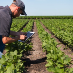 farmer soil sampling